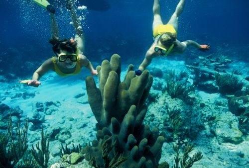 снорклинг к кораллам остров Харбор