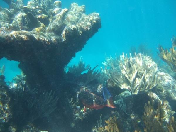 21 - Абако - острова на Багамах, которые подойдут всем