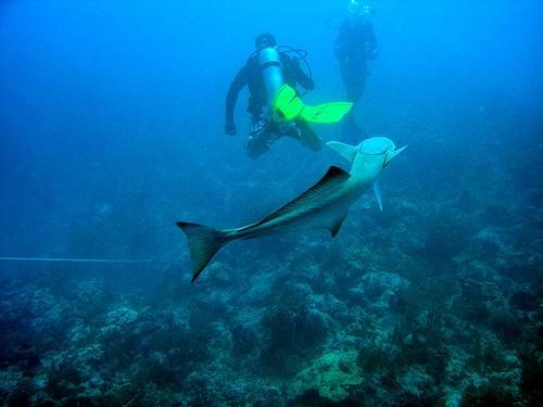 2352473240_e0b2efdc491 - Дайвинг с дельфинами и акулами, путешествие по подводным туннелям на островах Бимини