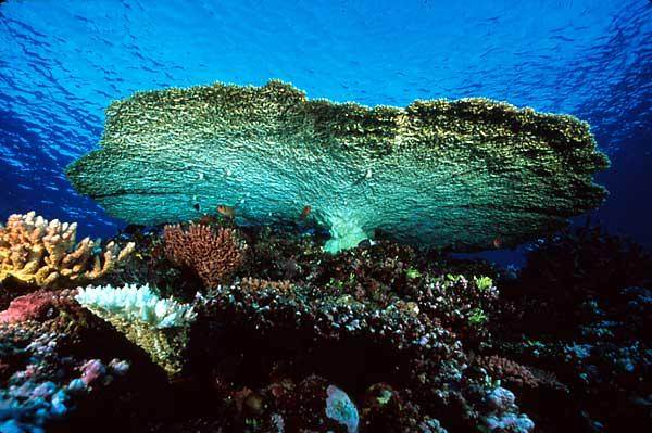 46756192jDVxQD_ph - Остров Аклинс - много рыбалки, дайвинга, снорклинга и мало магазинов