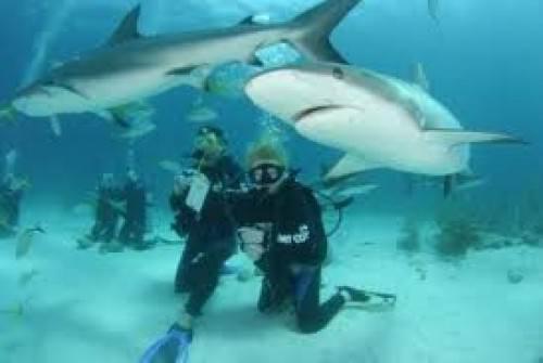 - Узнайте всё о дайвинге на Багамах - самом лучшем
