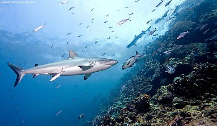 - Полюбуйтесь на дайвинг с акулами на острове Лонг Айленд