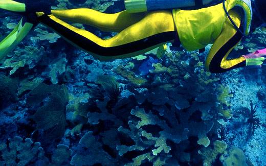 bahamas-diving-coral11 - Остров Харбор - лучшие места для дайвинга на Багамах