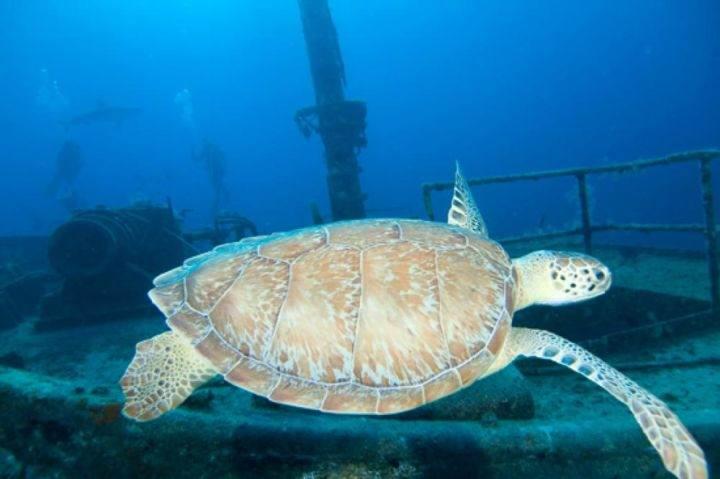 Багамы под водой фото затонувших кораблей