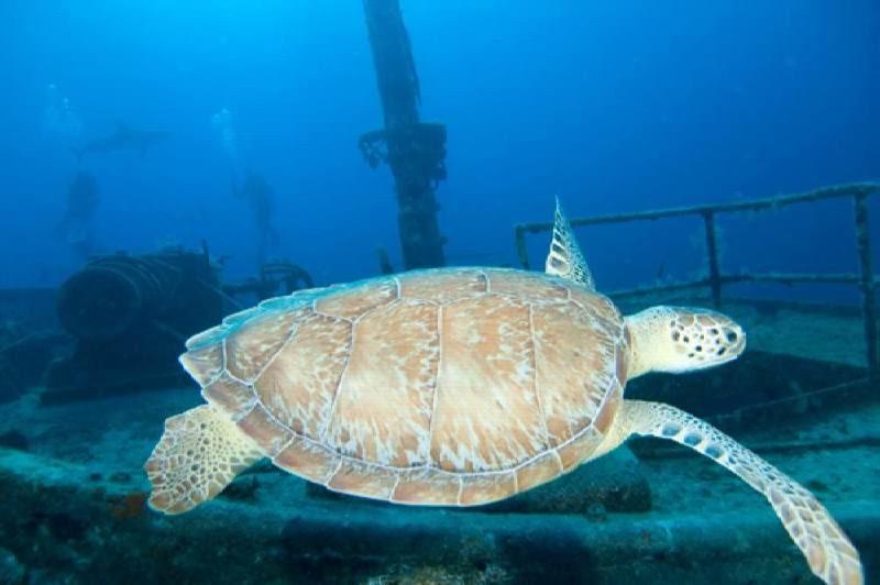 Это действительно очень необычно - дайвинг среди затонувших кораблей на Багамах