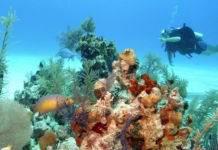 дайвинг риф на Багамах