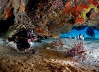 фото остров Эльютера БЬагамы