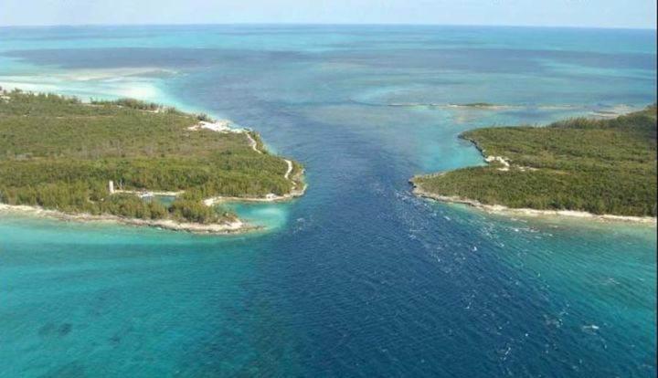 Остров Харбор - лучшие места для дайвинга на Багамах - Остров Харбор - лучшие места для дайвинга на Багамах