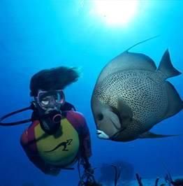fav-dive131 - Дайвинг с дельфинами и акулами, путешествие по подводным туннелям на островах Бимини