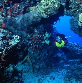 fav-dive61 - Дайвинг с дельфинами и акулами, путешествие по подводным туннелям на островах Бимини