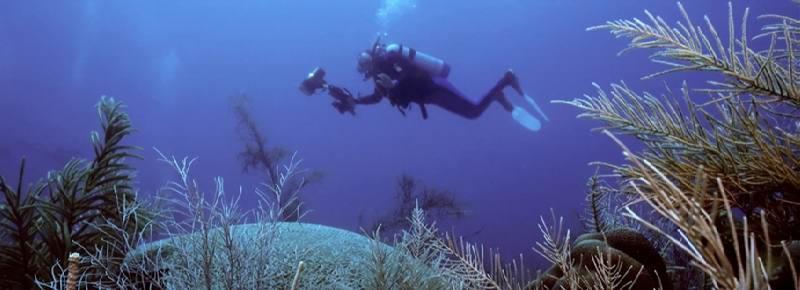 hiStock_000000654569Small1 - Остров Харбор - лучшие места для дайвинга на Багамах