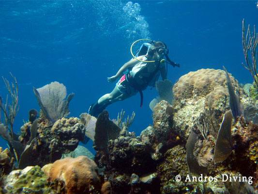Остров Андрос - чудо природы на Багамах