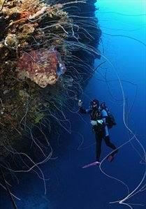 Little-Caverns1 - Дайвинг с дельфинами и акулами, путешествие по подводным туннелям на островах Бимини