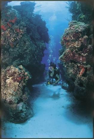 Nowdla_20at1 - Дайвинг с дельфинами и акулами, путешествие по подводным туннелям на островах Бимини
