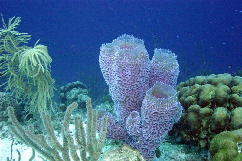 PurpleVaseSponge1 - Остров Харбор - лучшие места для дайвинга на Багамах