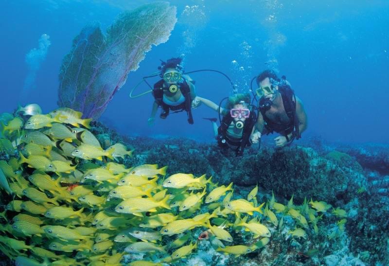 Scuba_diving-8001 - Дайвинг с дельфинами и акулами, путешествие по подводным туннелям на островах Бимини