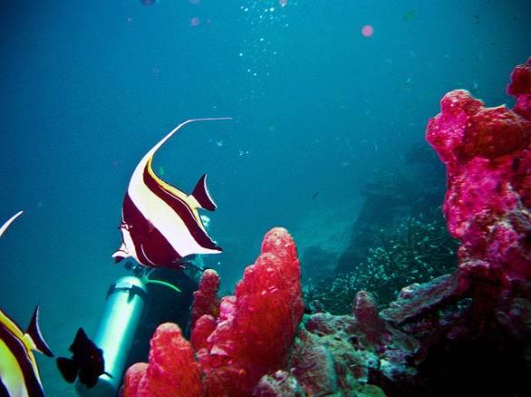 thai diving - 10 главных причин, чтобы посетить Тайланд
