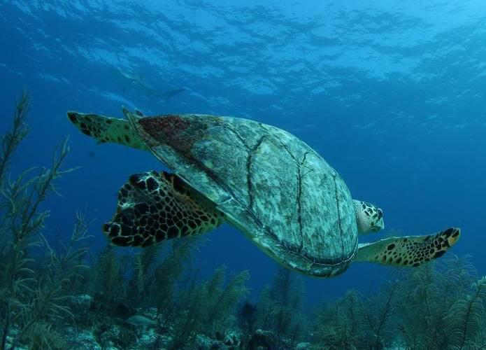 - Подробный список лучших развлечений на Багамах