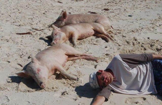 unforgettable_bahamas_vacation_640_22 - Остров свинок или счастлив как свинья.... на Багамах