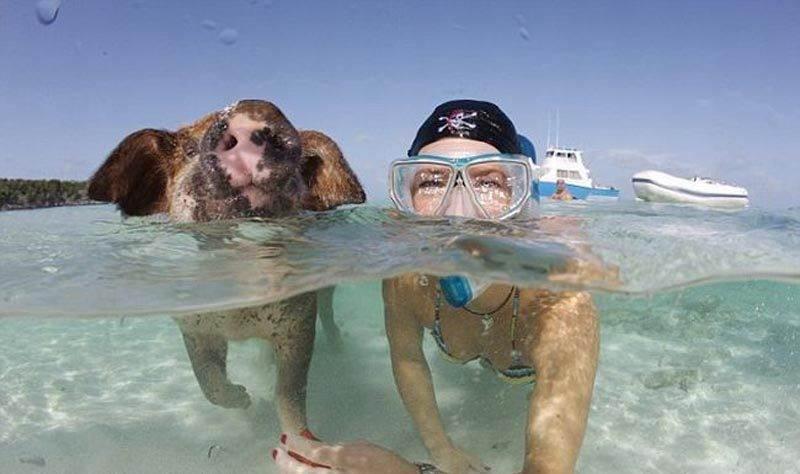 unforgettable_bahamas_vacation_640_23 - Остров свинок или счастлив как свинья.... на Багамах