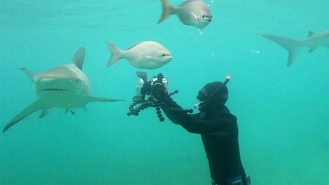 дайвинг на Багамах - Дайвинг с акулами на острове Абако