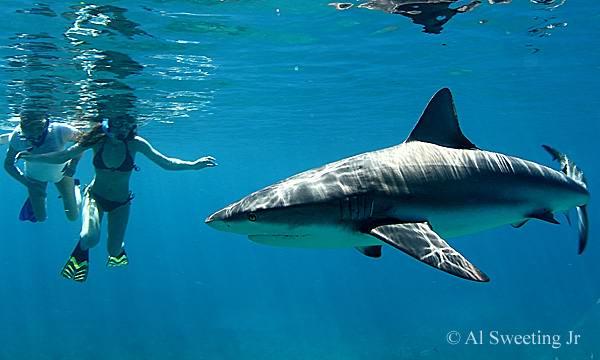 снорклинг на Бимини Багамские острова