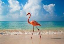 замечательный пляжный отдых в Доминиканы