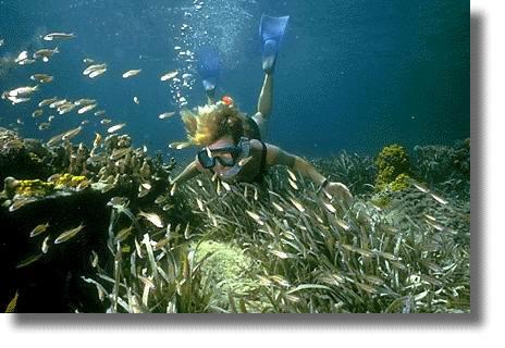 Багамы под водой