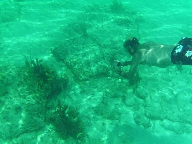 - Снорклинг на месте Атлантиды - остров Бимини на Багамах