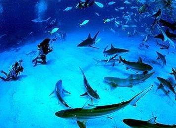дайвинг с акулами на Багамских островах
