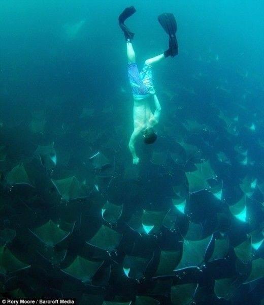 Представьте, что вы плывёте на лодке, а под вами ..... золотое море - Представьте, что вы плывёте на лодке, а под вами ..... золотое море