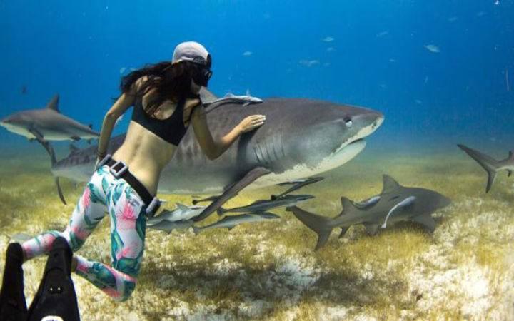 Дайвинг на Багамах не сравним ни с каким другим - Дайвинг на Багамах не сравним ни с каким другим