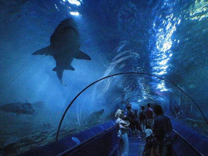 аквариум в пунта кана - Экскурсии в Доминикане в Пунта Кана