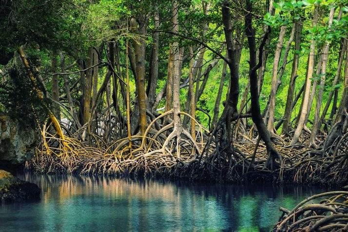 великолепная природа Доминиканы