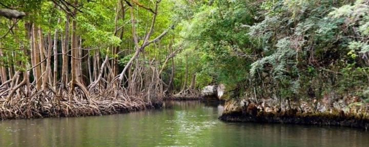 Los Haitises National Park - Полуостров Самана - пляжи, экскурсии и лучшие места