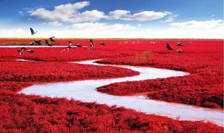 Экзотические пляжи Red-Beach-Panjin-China - Самые впечатляющие экзотические пляжи мира