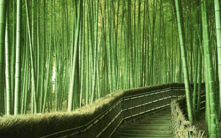 Sagano-Bamboo-Forest-Arashiyama-Japan Арашияма - 10 лучших экзотических мест для путешествия