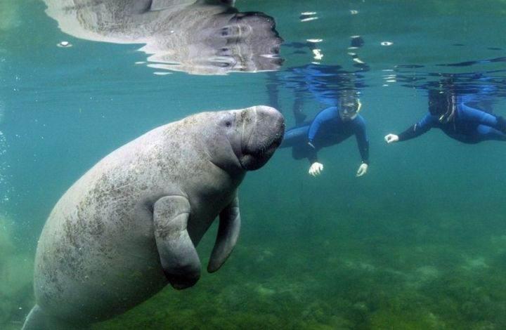Кристалл-Ривер, Флорида - Фотографии 10 лучших мест в мире для снорклинга