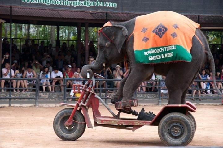 Шоу слонов - Экскурсии в Тайланде, которые следует обязательно посетить