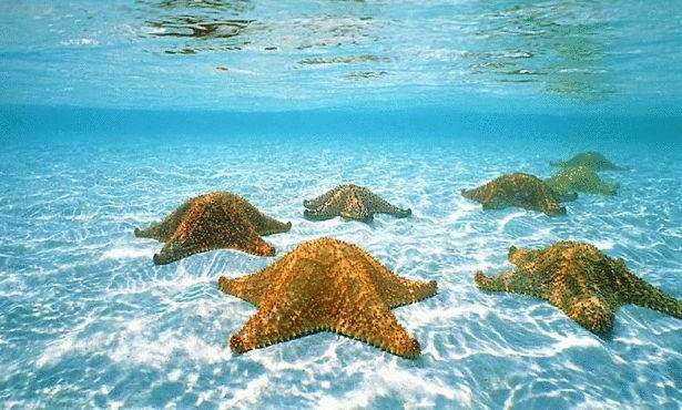 Экзотические пляжи мира Starfish Beach