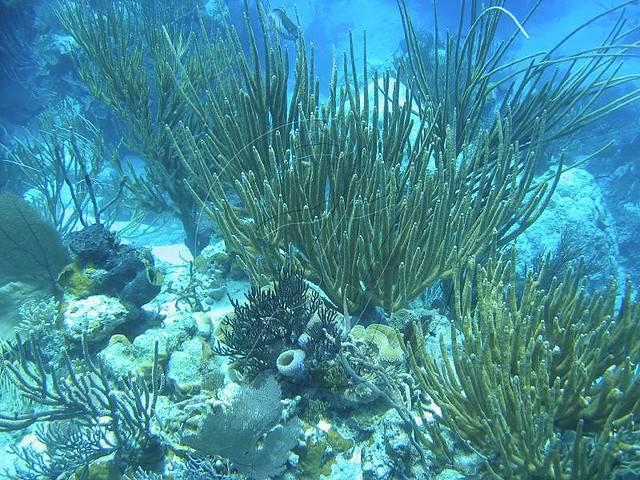 Эксума на Багамах дайвинг