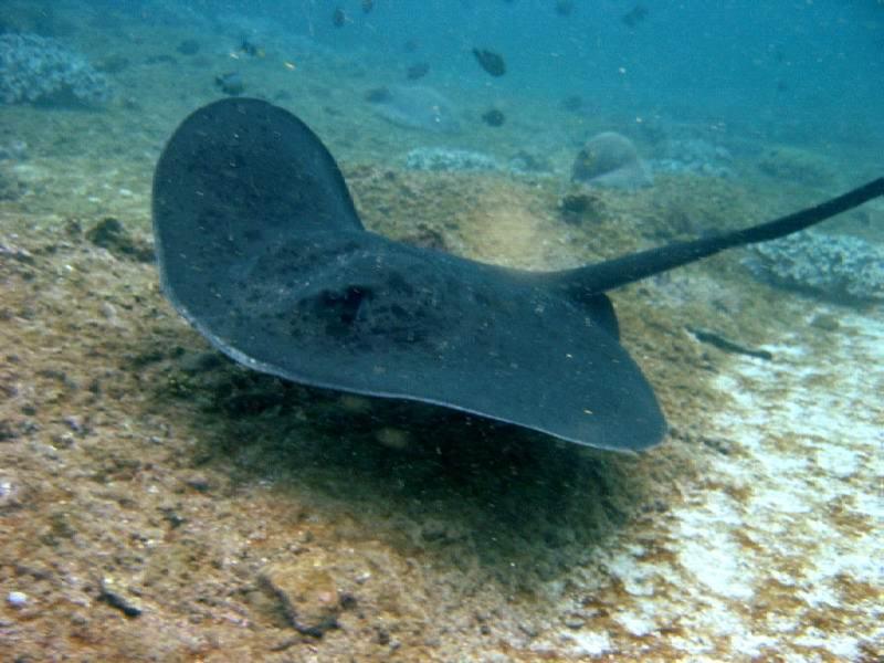 Cat20Island20Diving20220Sept202004200511 - Идеально для тропического путешествия - остров Кэт на Багамах