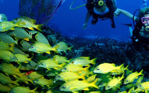дайвинг на Багамах на острове Эксума