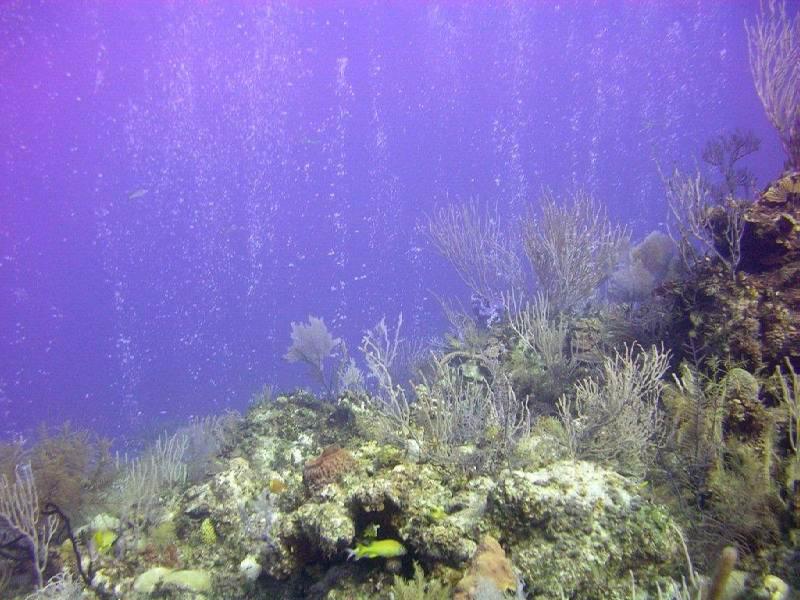Эксума dog rocks reef