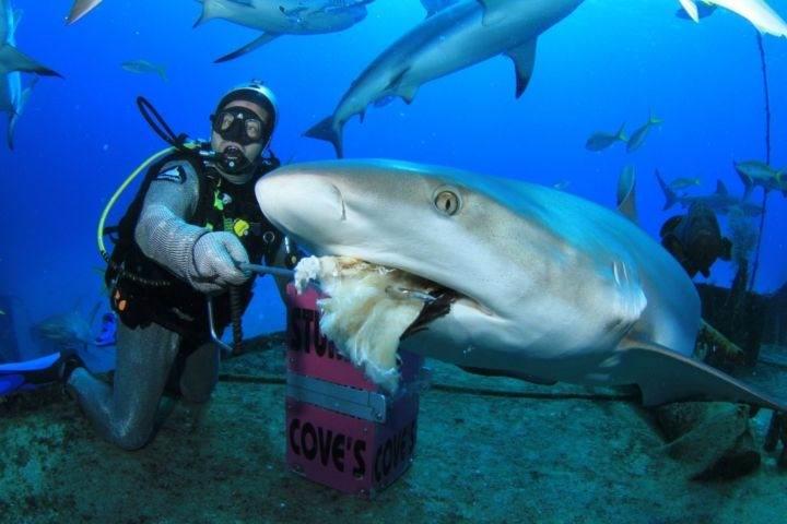 Полюбуйтесь на дайвинг с акулами на острове Лонг Айленд - Полюбуйтесь на дайвинг с акулами на острове Лонг Айленд