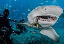 дайвинг с акулами на острове Лонг Айленд