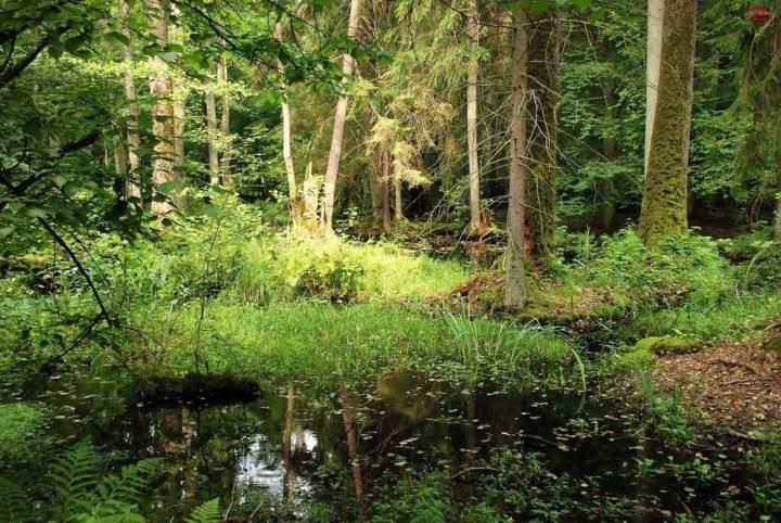 bialowieza-forest - 10 лучших экзотических мест для путешествия