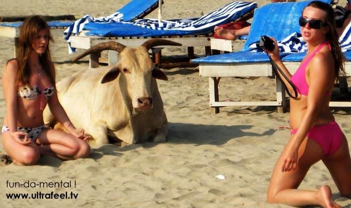 Экзотические пляжи мира bull-cow-holy-girl-meditation-beach-goa