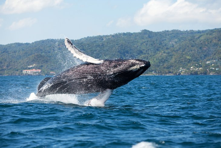 dominican-republic-places-to-visit-samana-bay-whale-watching