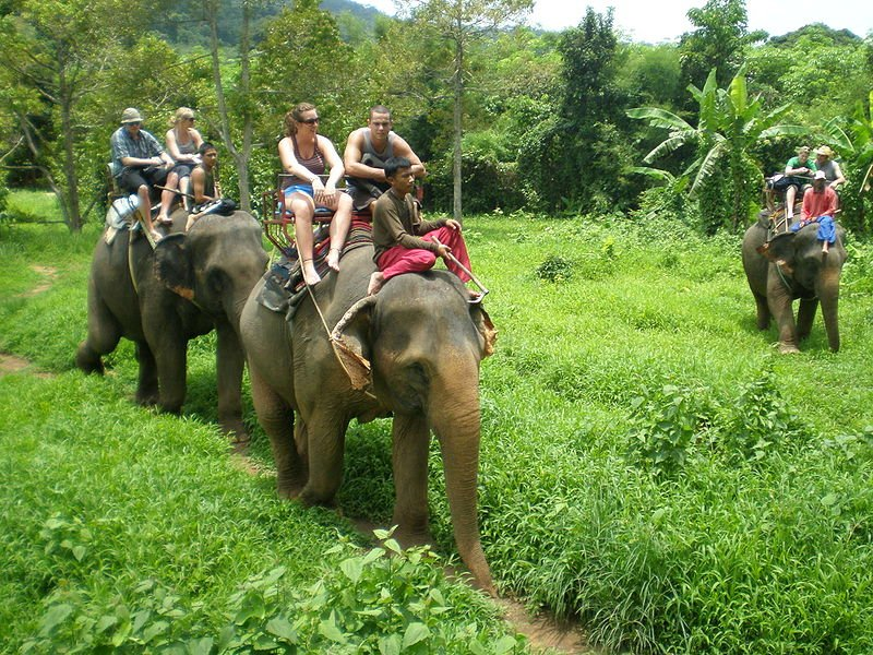 elephant_Koh_chang - Остров Ко Чанг – отличное место для отдыха в Тайланде